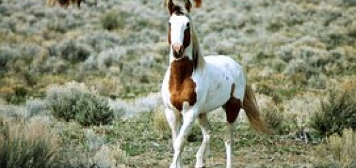 feral-horse-602277__180
