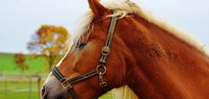 horse-1006353__180