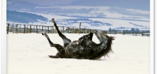 firts_snow_joy-t1