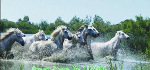 Blanco-Running-horse-moda-pintura-diy-del-diamante-resina-de-pintura-decorativa-pared-del-bordado-completo.jpg_640x640