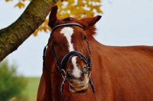 horse-1006357_960_720