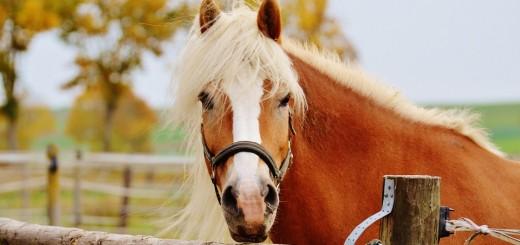 horse-1016451_960_720