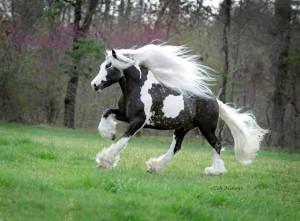 en-fotos-la-belleza-de-la-naturaleza-reflejada-en-estos-hermosos-caballos-y-sus-increibles-melenas
