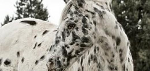 horse-423010__180