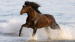 caballo-salvaje-en-el-mar_1873765421