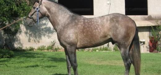 caballos-aztecas-600x450