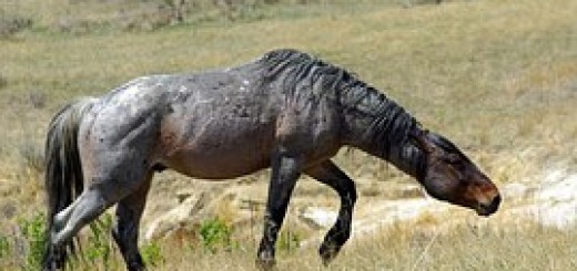 feral-horse-865537__180
