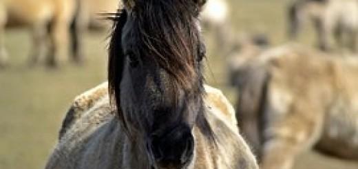 wild-horse-104621__180